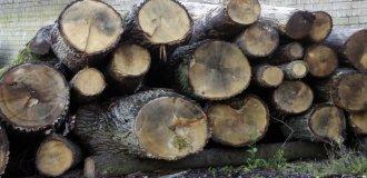 mediena - rastai